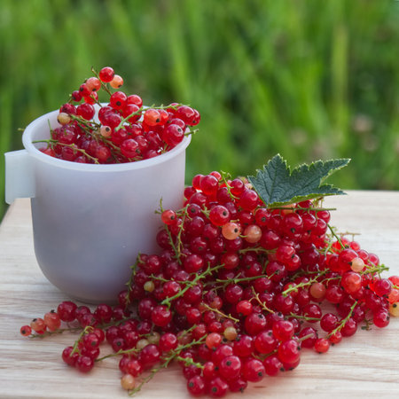 Summer photo of red currant berries harvest in tea cup on wooden table with green leafs and cuttings