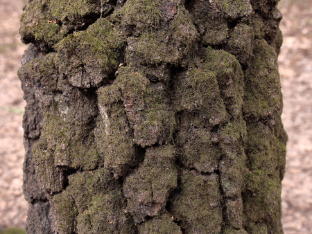 A picture of a moss-covered tree trunk. A fragment of the tree trunk is suitable for advertising or writing text. Banco de Imagens
