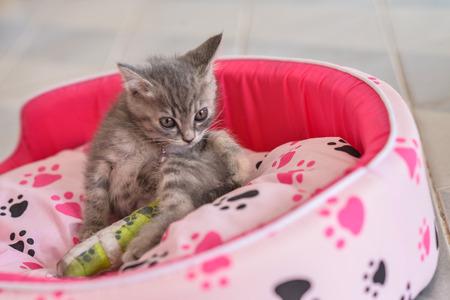 sick cat leg splint photo