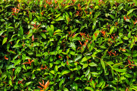 fence rad leaf and green leaf Stock Photo