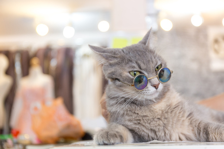 sun glasses: Cat fashion with sun glasses Stock Photo