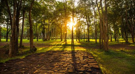 summer sunset and red stone floor in the forest in Thailand Stock Photo