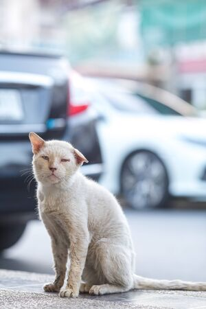The white stray cat sits pathetic. On the roadside