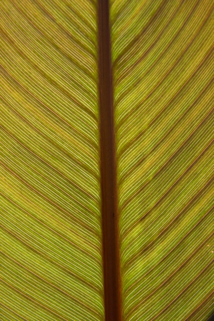 Backlit Leaf with colored patterns. Stock Photo