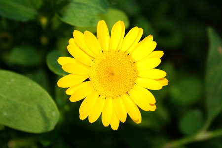 close up view of small yellow flower