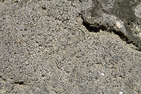 repetitious: close up view of lichen on the stone Stock Photo