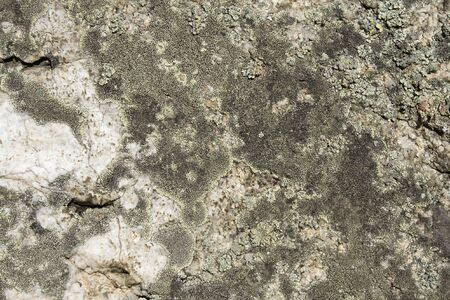 close up view of lichen on the stone Stock Photo