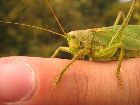 grasshopper on finger Stock Photo - 3259317