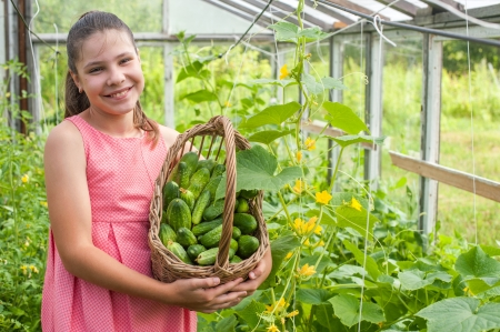 Lovely girl with cucumber harvest in the basket