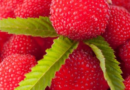 garden berry hybrid of blackberry and raspberry photo
