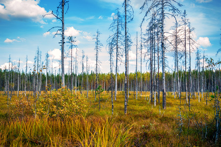 Autumn forest in a sunny day in Karelia, Russia photo