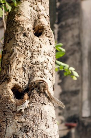 chordates: Many ground-squirrels on the tree sitting on the tree Stock Photo