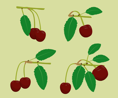 beautify: The set of cherries with leaves on the branches Illustration
