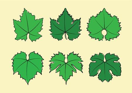 grape leaves: Vector set of hand drawn wine grape leaves varieties
