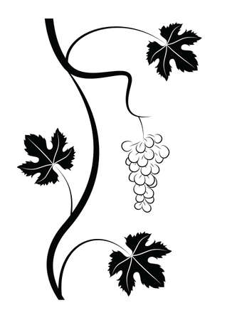 black vine with leaves and grape fruit on a white background Ilustração