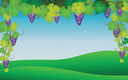 Hanging bunch of ripe purple grapes with branches and leaves on a background of green grass and sky. Realistic vector illustration.