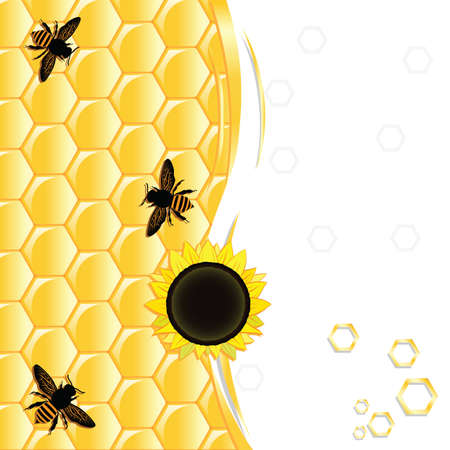 Honeycombs, sunflower seeds and bees on a white background. With a place for text