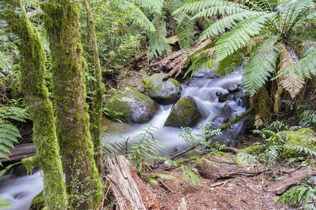 mosses: Rainforest stream with trees, ferns, mosses and other plants in a national park