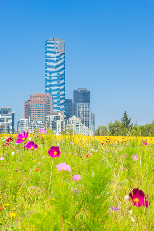Flowers garden with Southbank skyline in the background in Melbourne, Australia during daytime