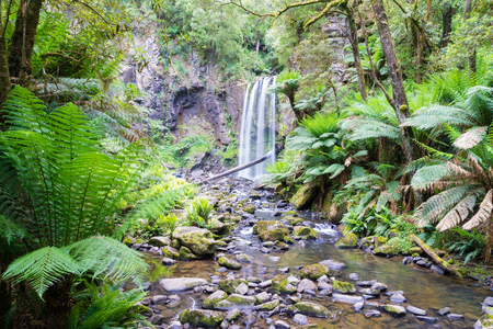 View of waterfall in the rainforest in the Great Otway National Park along the Great Ocean Road in Victoria, Australia during daytime
