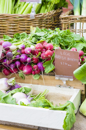 Fresh radish bunches in local farmers market Stock Photo - 77425058