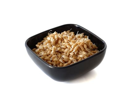 sprouted: Bowl of sprouted wheat berries isolated on white Stock Photo