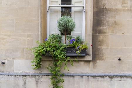 plumbum: A flower pot on a window ledge of a ancient Roman building in Bath Stock Photo