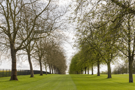 Alley of trees in Windsor Stock Photo