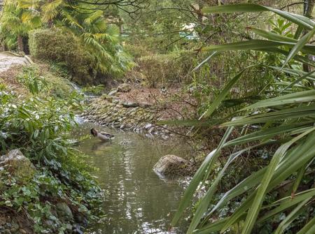 Forest Stream, Center Parcs, Elveden Forest, UK