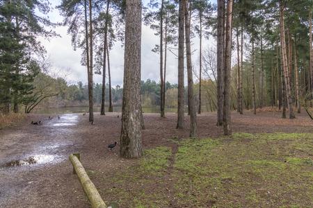 Elveden Forest Landscape Trees