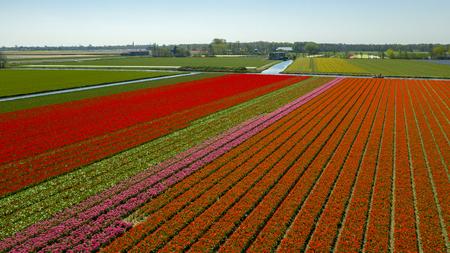 Vue aérienne des champs de tulipes au printemps, Hollande, Pays-Bas