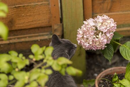 Little kitten is sniffing flower and grass