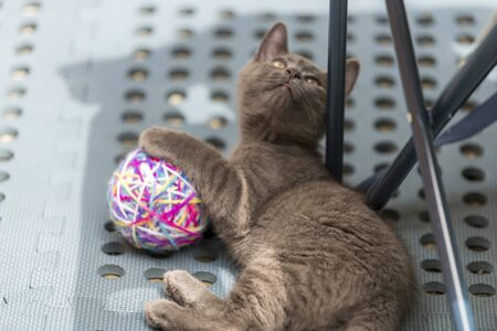 Grey cat playing with a ball of yarn lying on the bed. Shallow focus, blurred background. Stok Fotoğraf