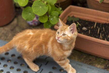 Little ginger kitten is playing in the garden Stok Fotoğraf