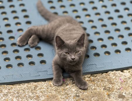 Grey cat playing in the back garden. Shallow focus, blurred background. Cat is chasing after flies