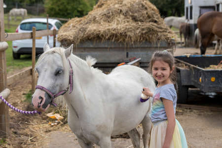 Smiling pretty young girl standing grooming the horse with a brush in an outdoor paddock 版權商用圖片