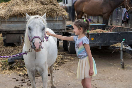 Smiling pretty young girl standing grooming the horse with a brush in an outdoor paddock Фото со стока