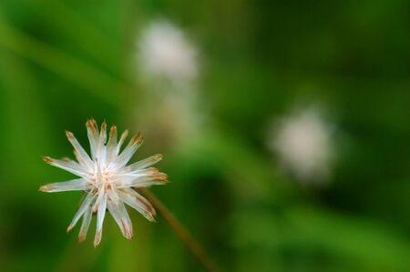 A wilt coat buttons flower