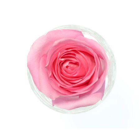 Isolate pink rose, a top view closeup photo image of single pink rose in a glass isolate on white bright light background, single pink rose,  flower pattern, flower background, flower wallpaper Stock Photo