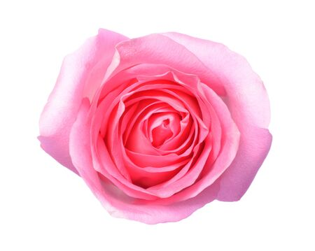 Pink rose a top view photo of single pink rose flower isolate pink rose a top view photo of single pink rose flower isolate on white background mightylinksfo