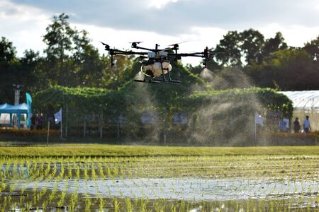 Carrying agriculture drone, photo image of agriculture drone carry a tank of liquid fertilizer flying over the rice field and spraying it on a rice sprouts, agriculture technology, drone technology Reklamní fotografie