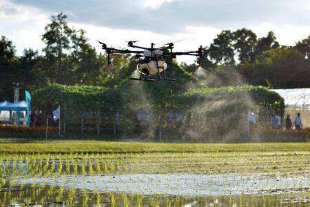 Llevar un dron agrícola, imagen fotográfica del dron agrícola llevar un tanque de fertilizante líquido volando sobre el campo de arroz y rociarlo sobre un arroz germinado, tecnología agrícola, tecnología de drones Foto de archivo