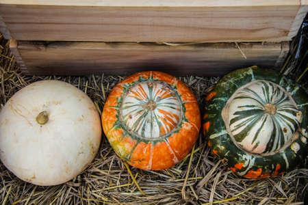 pumpkin fancy