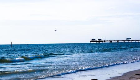 stingrays: Seashore Over the Ocean Stock Photo
