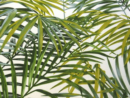 Background leaves of tropical palm trees with different shades of green. Set of intertwined green palm leaves on white background for texture, background, design elements.