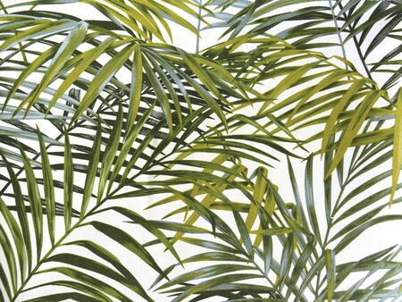 Background leaves of tropical palm trees with different shades of green. Set of intertwined green palm leaves on white background for texture, background, design elements