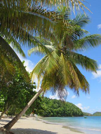 Palm tree and turquoise water in beautiful beach in Martinique, French west indies. Antilles, Caribbean sea