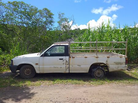 Rusty pick up abandoned in sugar cane crop field. Caribbean