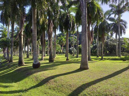 Palm grove with grass. Caribbean landscape. Tropical blue sky. Stockfoto