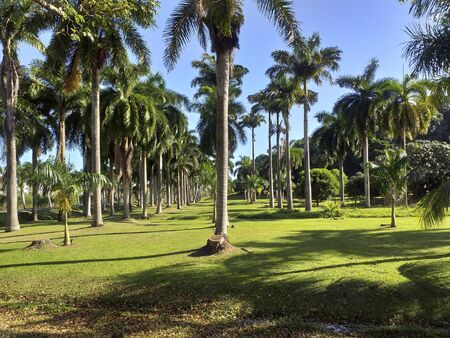 Tropical garden with grass and palm trees. Caribbean blue sky.